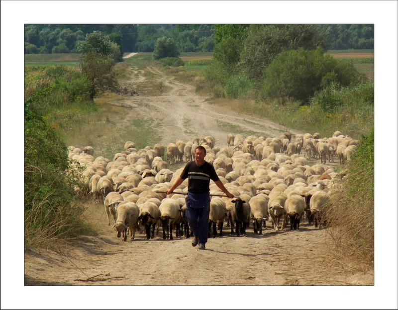 Milyen pásztora vagy a nyájadnak?